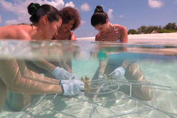 Coral planting 03