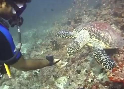 Finding Nemo's Friends
