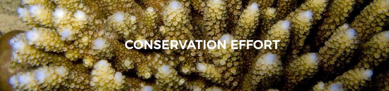 banner_conservation_effort